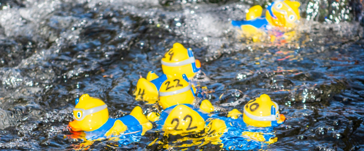 rubber ducks drifting in an active stream